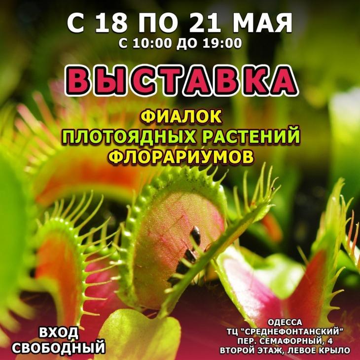 Выставка фиалок, плотоядных растений и флорариумов.