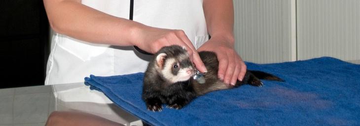 День працівників ветеринарної медицини