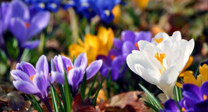 Весенний день в саду для всей семьи