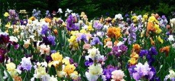 Ботанічний сад запрошує на дні відкритих дверей