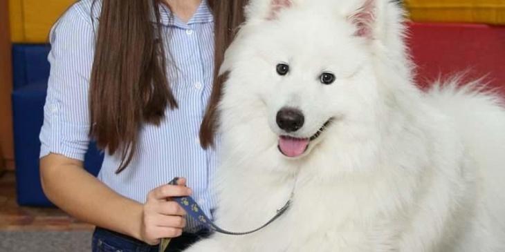 """Интерактивная сказка """"История одной собаки"""""""