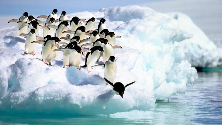 """Свято для дітей """"Як Пінгвіни весну зустрічали!"""""""