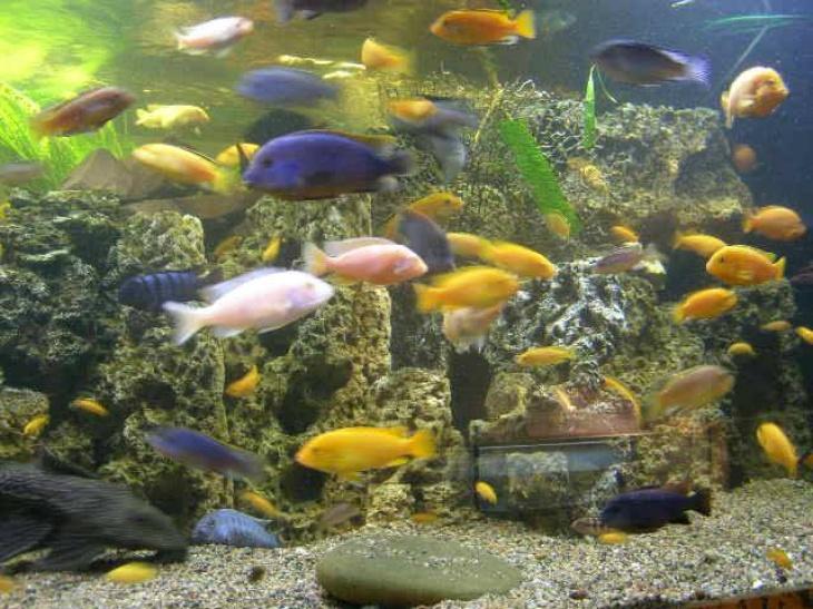 Виставка акваріумних риб та рослин