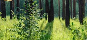 Прогулянка-екскурсія до Самарського лісу