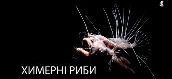 """Демонстрація """"Химерні риби"""""""