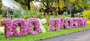 Бал хризантем в Фельдман Экопарк