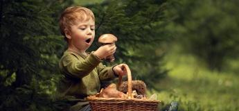 Семейная поездка по грибы