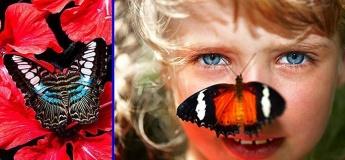 День рождения на Планете бабочек на ВДНХ