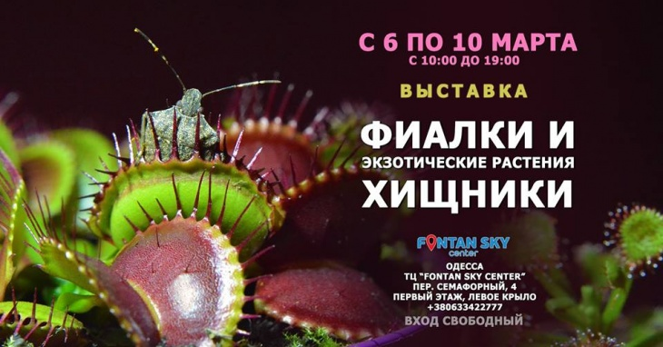 К 8 марта - Фиалки и Экзотические растения Хищники