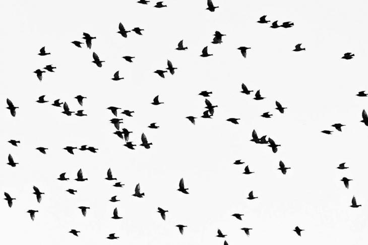 Пташиний квест для дітей
