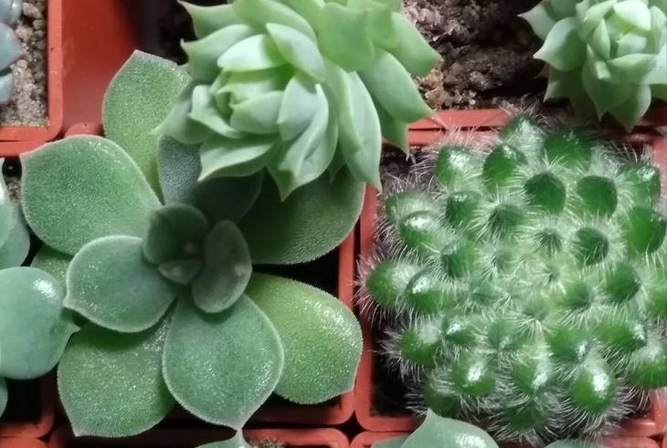 Виставка кактусів та інших екзотичних рослин