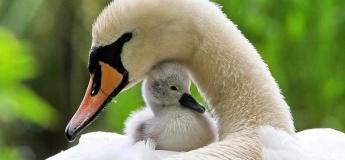 Поход на Гребной канал к лебедям