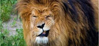 Термін дії ВІП-карт від Зоопарку 12 місяців подовжено