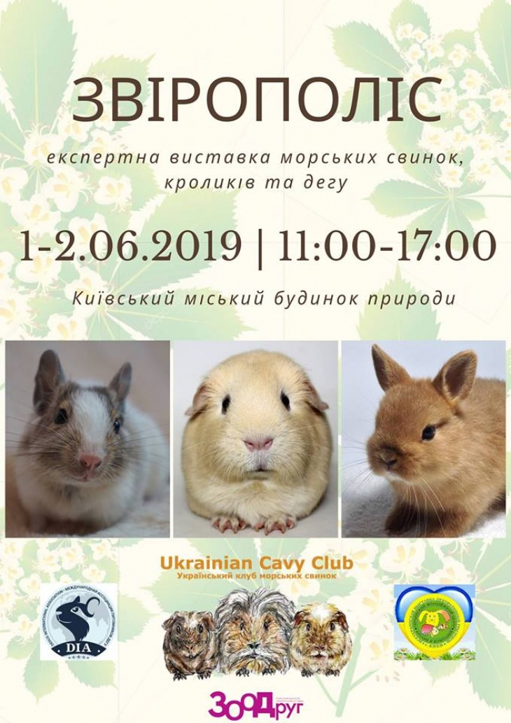 Звірополіс - експертна виставка морських свинок, кроликів та дегу