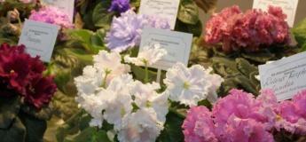 Выставка фиалок, хост, растений-хищников