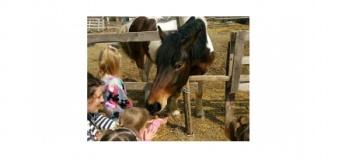 Загородный конный лагерь
