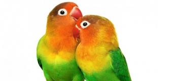 """Виставка птахів і тераріумних тварин """"TropicPets"""""""