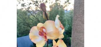 МК Орхідея з фоамірану