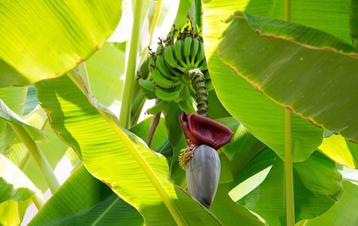 """Екскурсія на бананову ферму + закритий парк """"Залісся"""""""
