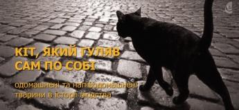 Кіт, який гуляв сам по собі