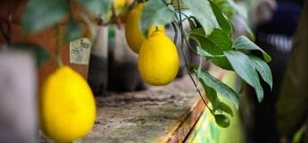 """Экскурсия на банановую ферму + закрытый парк """"Залесье"""""""