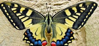 """Відкриття виставки """"Метелики"""""""