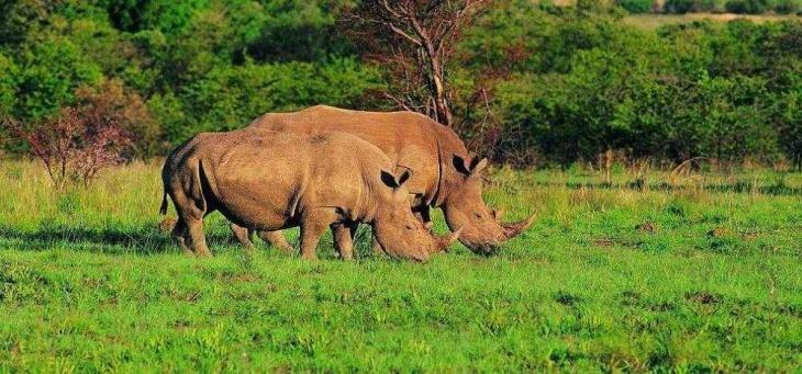 Межднународная акция в защиту носорогов в Одесском зоопарке