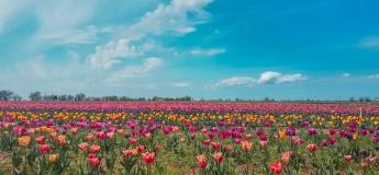 Долина тюльпанов и Аскания-Нова