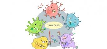 Здоров'я та імунітет