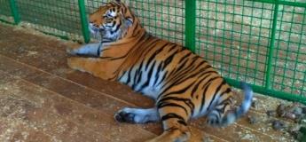 Хортица + зоопарк