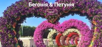Фестиваль петунии в Добропарке
