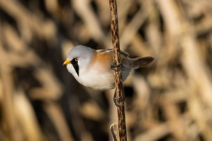 Недільний birdwatching на Святошинських ставках