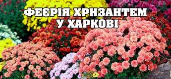 Бал хризантем в Фельдман экопарке, Харьков и его семь чудес