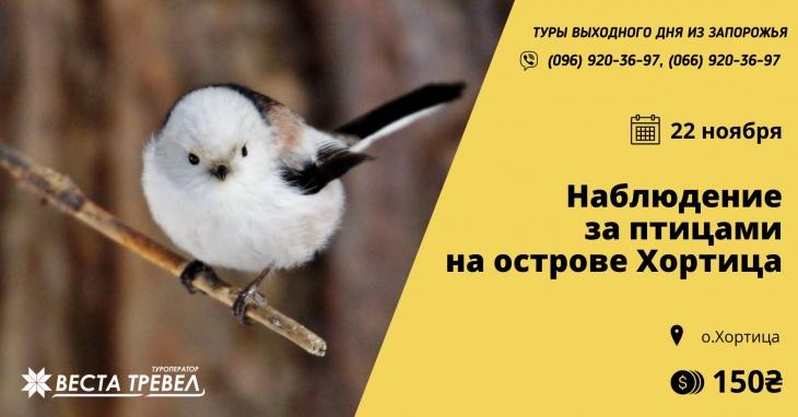 Наблюдение за птицами на острове Хортица