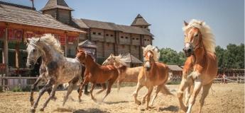 На Київщині покажуть рідкісних стародавніх коней
