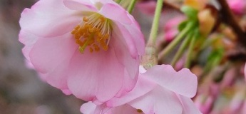 Криворізький ботанічний сад запрошує всіх помилуватися квітами та пробужденням природи