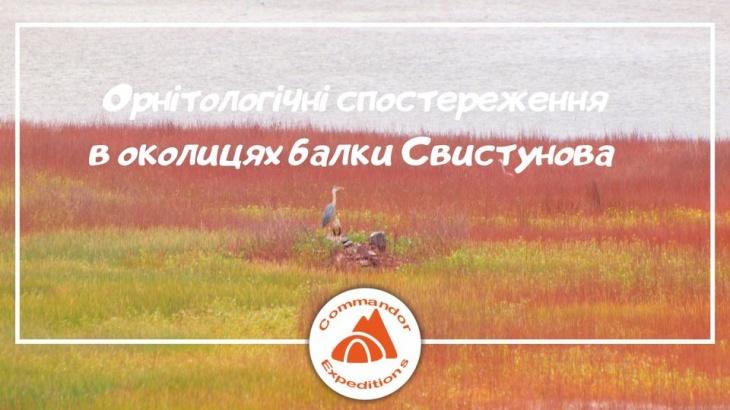 Орнитологические наблюдения в окрестностях балки Свистунова