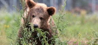 "Презентація книги «Місія ""Порятунок"": ведмеді   The book presentation Mission «Rescue»: Bears"