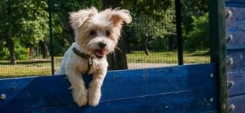 Площадки для безопасного выгула и дрессировки собак