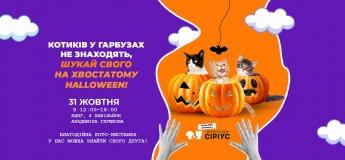 Хвостатий Halloween