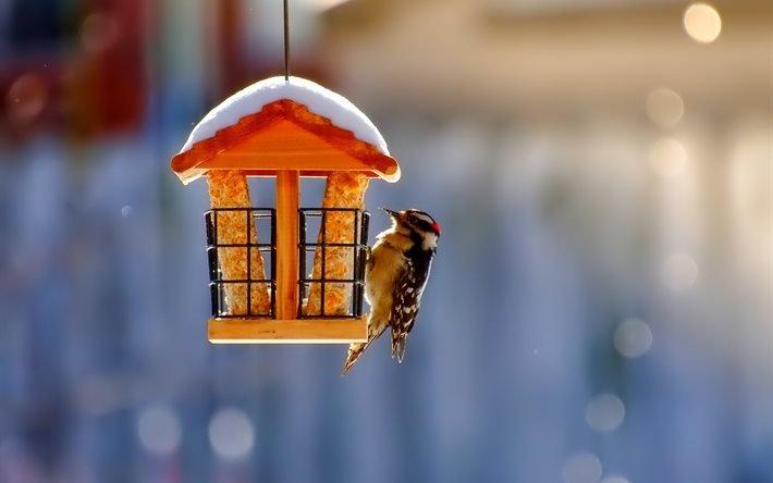 """Праздник """"Готовимся к зиме"""" в Одесском зоопарке"""