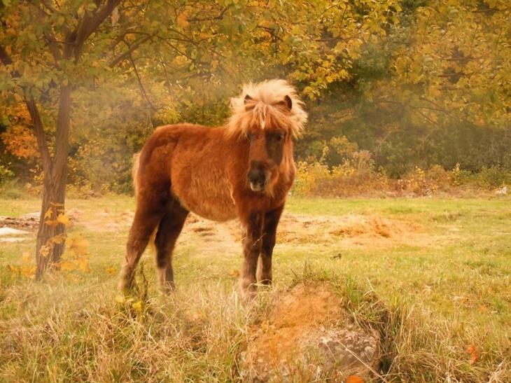 Знайомство з поні