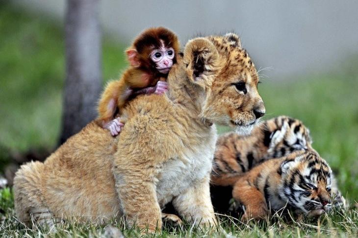 """""""Дай имя малышу"""". Конкурс от Одесского зоопарка"""