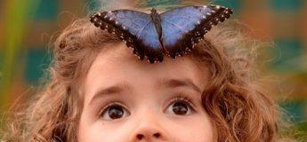 Київська виставка живих тропічних метеликів та інших комах