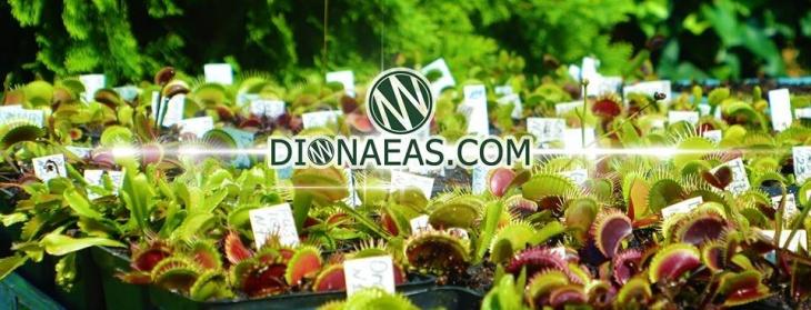 Интернет-магазин хищных растений DIONAEAS