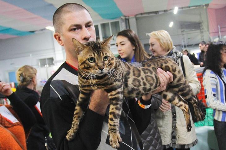 """Клуб любителів котів """"Оскар"""""""