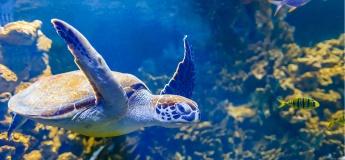 Oceanarium Lviv