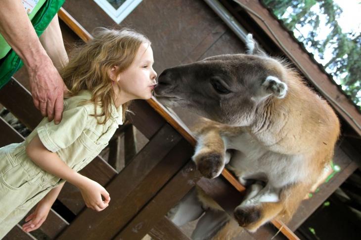 Парк животных «АНИМАЛ ПАРК»