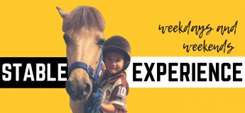Stable Experience