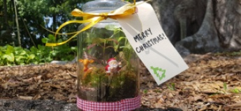 Christmas in a Bottle (A Planting Workshop)